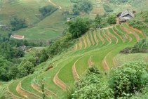 ubud_terraced-rice-fields
